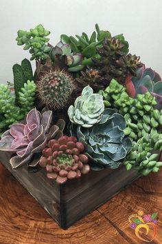 Indoor succulent garden, cacti and succulents, planting succulents, cactus Growing Succulents, Succulents In Containers, Cacti And Succulents, Planting Succulents, Cactus Plants, Planting Flowers, Succulent Gardening, Container Gardening, Organic Gardening
