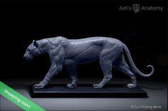 Leopard Anatomy model 1/6th scale - flesh & superficial muscle – Jun's…