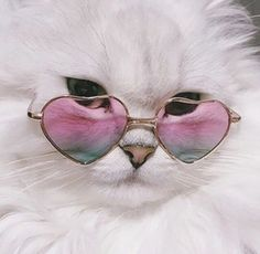 Funny Animals Photography Eyes 47 New Ideas Funny Cute Cats, Cool Cats, Illustration Photo, Illustrations, Cute Baby Animals, Funny Animals, Wallpaper Gatos, Gatos Cool, Cat Hacks