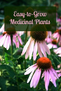 Easy-to-Grow Medicinal Plants