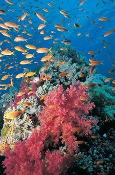 Hexacorallia corals betting