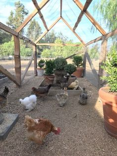 pretty way to let them have fresh air and things to do while still contained #chickencooptips #DIYchickencoopplans