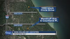 Dog Killed by Coyotes in Whitefish Bay