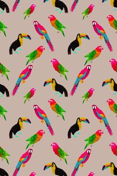 Aves.#3