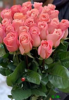 Flowers for you Beautiful Flowers Wallpapers, Beautiful Rose Flowers, Flowers Nature, Exotic Flowers, Pretty Flowers, Rose Arrangements, Beautiful Flower Arrangements, Pink Roses, Pink Flowers