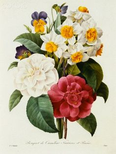 Camellia art Antique flower art print vintage botanical art prints garden wall art home decor wall art old prints French art Victorian art Art Floral, Vintage Botanical Prints, Botanical Drawings, Vintage Flower Prints, Botanical Flowers, Botanical Art, Flowers Illustration, Impressions Botaniques, Narcisse