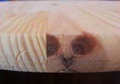 cat's cat