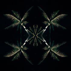 Palms far-north night Palms, Amanda, Plant Leaves, Landscapes, Abstract, Night, Artwork, Flowers, Paisajes