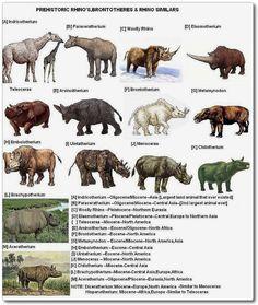 Species evolution chart