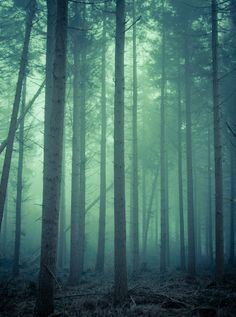 Through The Forest by Henrik Emtkjær Hansen on 500px