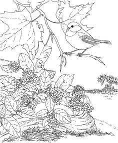 free printable coloring pagemassachusetts state bird and flower black capped