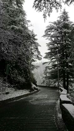 Mussoorie, Dec. 2013. Path to Lal Tibba.