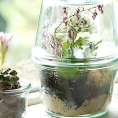 Tiny Terrariums in Weck Jars