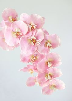Soft Touch Phalaenopsis Orchids in Pink - Orchid Bouquet, Flower Bouquet Wedding, Floral Bouquets, Blush Flowers, Pretty Flowers, Orchid Flowers, Most Beautiful Flowers, Flower Spray, Phalaenopsis Orchid