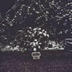 Bei uns schneit es... wie verrückt  #schnee #schneefall #Winter #Bayern