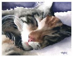 CAT SLEEPING Art Print Signed by Watercolor Artist DJ Rogers