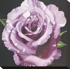 Rose Stretched Canvas Print by Elizabeth Hellman at AllPosters.com