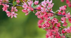 April 29 is Arbor Day! Find out how you can get 10 FREE flowering trees by joining the Arbor Day Foundation. Garden Trees, Trees To Plant, Outdoor Plants, Outdoor Gardens, Outdoor Spaces, Arbor Day Foundation, 10 Tree, Arbour Day, Plant Information