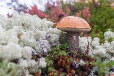 Amazing Nature, Flora, Stuffed Mushrooms, Vegetables, Arrows, Fungi, Shelving Brackets, Mushroom, Mushrooms