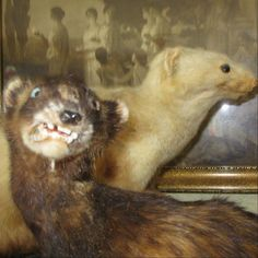 When taxidermy goes horribly, hilariously wrong.