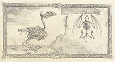 """pi-e: """" William Cheselden's Osteographia (1733) """""""