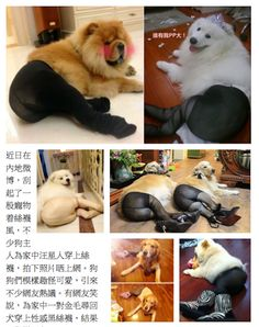 Chinese Dogs Dressed In Pantyhose | Happy Place. This is just weird.