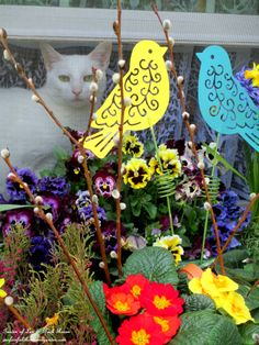 Springtime ~ cat in the open window  http://ourfairfieldhomeandgarden.com/signs-of-spring-at-our-fairfield-home-garden/