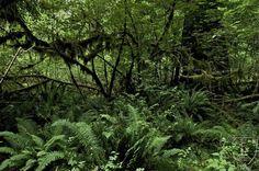 Jungla. Una fotografía de una jungla.