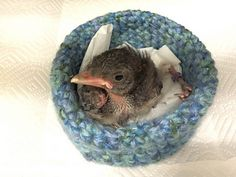 "Bird and Wildlife Rescue Nests Wildlife rehabilitation centers often use hand knit and crochet ""nests"" to cradle orphaned and injured birds and other wildlife while they are recovering. Crochet Jumper, Crochet Birds, Crochet Food, Crochet Flower Patterns, Crochet Bear, Crochet Animals, Crocheted Flowers, Free Crochet, Knitting For Charity"