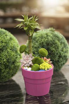 Mini garden fun!