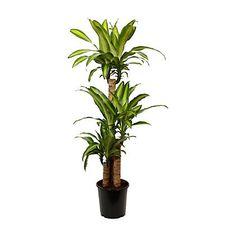 Möbler, inredning och inspiration in 2018 | LIVING ROOM ideas ... on amazon plants, sam's club plants, costco plants, laura ashley plants,