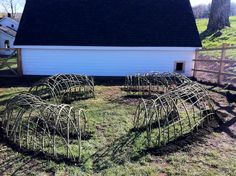 Living willow tunnel in chicken coop provide a covered protective area for chooks.