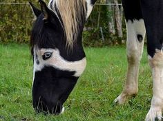 Most Unusual Horses | The most unique horse markings. You won't believe the last photo