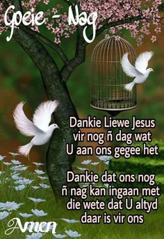 Lekker Dag, Evening Greetings, Goeie Nag, Angel Prayers, Goeie More, Good Night Quotes, Special Quotes, Sleep Tight, Day Wishes