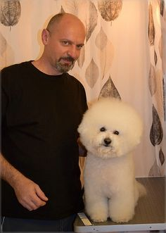 One of customer on grooming, beautiful Bichon Frise, Heinola - Finland