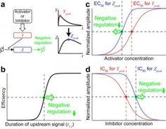 Analysis of sensitivity control through signal transduction. #UTokyoResearch