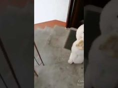 Cute Puppies, Cute Dogs, Dogs And Puppies, Funny Bets, Funny Dog Videos, Try Not To Laugh, Baby Dogs, Puppies, Funny Dogs