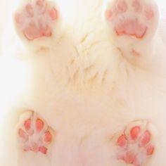 """無重力猫ミルコのお家@ねこ休み展さんのツイート: """"肉球の日なので、詰め合わせ… """""""