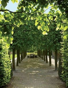 Renowned landscape designer Jacques Wirtz created this garden at a private home in northwestern Belgium (see AD, August Known for sculpting boxwood and yew into informal shapes throughout expansive landscapes, Wirtz crafted an allée of linden trees Landscape Architecture, Landscape Design, Garden Design, Amazing Gardens, Beautiful Gardens, Trees Beautiful, Beautiful Space, Garden Paths, Garden Landscaping
