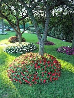 I wonder if this harms the tree? Flower beds surrounding planted trees - Gardening Trips I wonder if this harms the tree? Flower Bed Borders, Flower Beds, Landscaping Around Trees, Front Yard Landscaping, Garden Trees, Lawn And Garden, Garden Art, Beautiful Flowers Garden, Beautiful Gardens