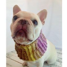 Gorgeous soft handmade  French Bulldog cowl / neckwear   Many beautiful colors available   Tapered to fit with love in each stitch  Please see website for more details  Pets, weddings events anytime cowl frenchies furbaby HandmadeHowlinCowls.com and HowlinCowls.com