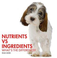 Is Dry Cat Food Okay For Dogs