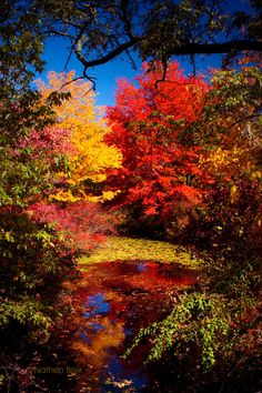 Harriman State Park, New York by Nathan Brisk