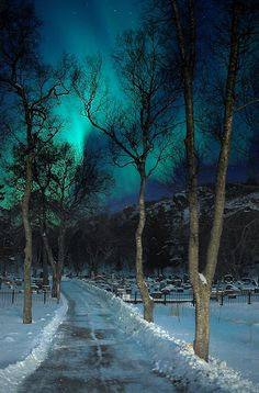 Northern Lights over a graveyard in Kabelvaag, Nordland Fylke, Norway.