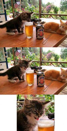 Kitten Tastes Beer