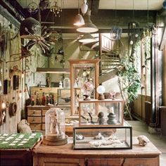 Cabinet de curiosités Tube oeufs de cailles Coturnix japonica Naturalisme