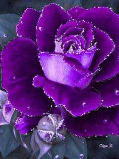 Purple rose with glitter. Beautiful Flowers Wallpapers, Beautiful Rose Flowers, Love Rose, Pretty Flowers, Purple Flowers, Red Roses, Purple Love, All Things Purple, Purple Rain