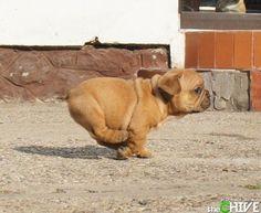 Chubby.