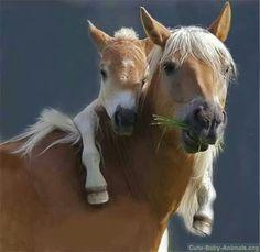 #Babyhorse