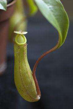 O blogu Banana, Fruit, Plants, Life, Cactus, Bananas, Plant, Fanny Pack, Planets